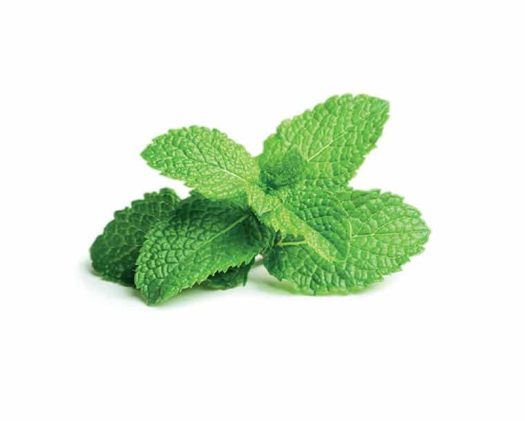 0 Amazing Herbs That Strengthen Your Digestion; Peppermint